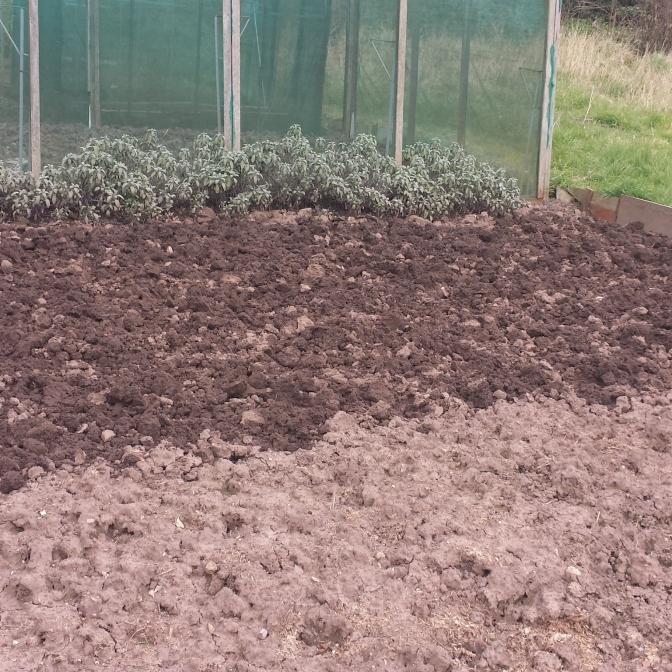 plot for parsnips/carrots