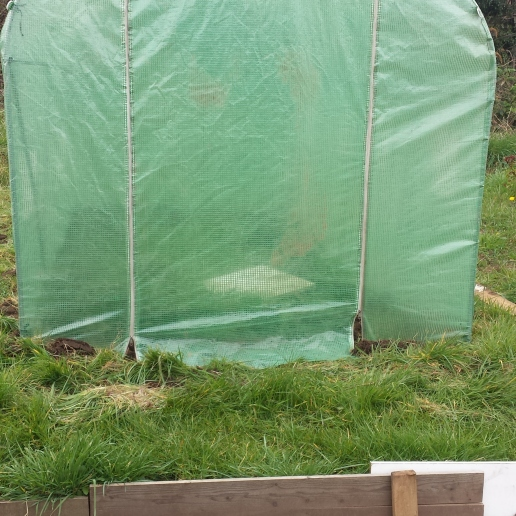 rescued polytunnel
